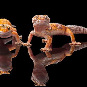 Cheers.... by Aditya Permana - Animals Reptiles ( , color, colors, landscape, portrait, object, filter forge )
