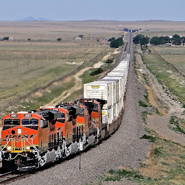 BNSF Train  by Steven Aicinena - Transportation Trains ( bnsf, train, new mexico,  )