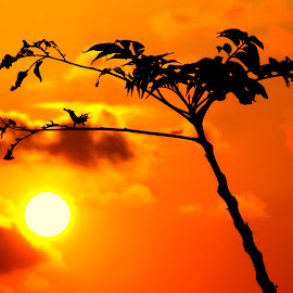 Orange fever by Kannan Manoharan - Nature Up Close Other plants ( plant, orange sky, sun,  )