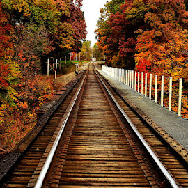 Wooden Railway Tracks/Bridge by Kourtney Monroe - Transportation Railway Tracks ( fall, color, colorful, nature )