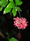 Květina - růžová