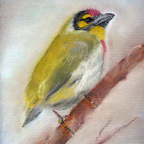 Coppersmith Barbets  by Jasna Dragun - Painting All Painting ( pastel, freedom, small birds, beauty, painting,  )