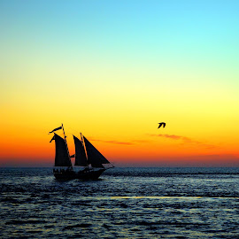 Sunset Sailing by Steve Parsons - Transportation Boats ( sailing, florida, sunset, silhouette, gulf, sailboat, destin )