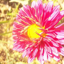 by Srishti Pandey - Nature Up Close Gardens & Produce