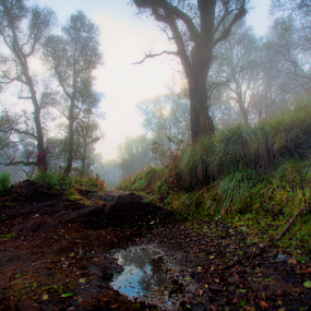 Fog in the mountain by Cristobal Garciaferro Rubio - Landscapes Forests ( mountain, grass, fog, mexico, trees )