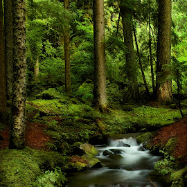 Enchanted Hike by Candee Watson - Nature Up Close Water ( water, oregon, forrest, waterfalls, moss, trees, rocks, river )
