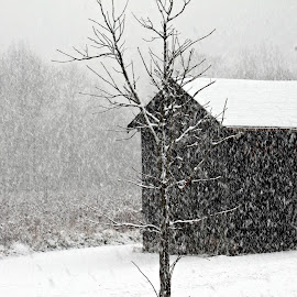 by Christine Warner - News & Events Weather & Storms ( novice, nature, snow, novices only, snowing )
