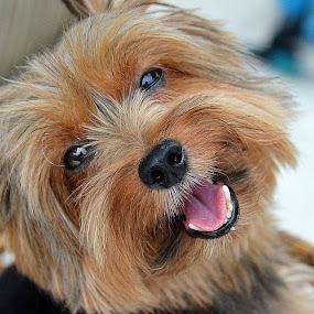 by Tupu Kuismin - Animals - Dogs Portraits ( #GARYFONGPETS, #SHOWUSYOURPETS )