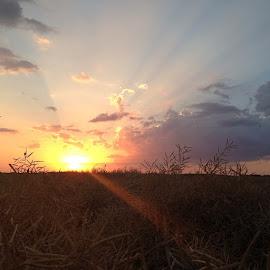 by Kimberly Mehrer - Landscapes Prairies, Meadows & Fields ( prairie, sunset )
