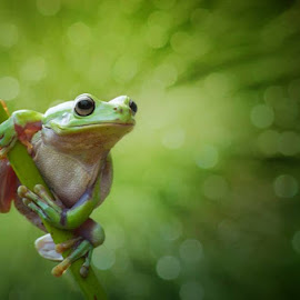 mr.kermit by Vianz . - Animals Amphibians