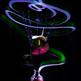 Beauty of the black by Amol Patil - Abstract Light Painting ( vase, light painting, flower pot, black )
