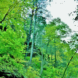 by Rhonda Rossi - City,  Street & Park  Vistas ( renewal, green, trees, forests, nature, natural, scenic, relaxing, meditation, the mood factory, mood, emotions, jade, revive, inspirational, earthly )