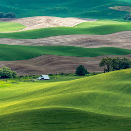 Wheat fields in spring. by Bob Juarez - Landscapes Prairies, Meadows & Fields ( landscape photography,  )