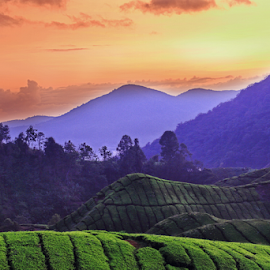 201208200702 Tea Farm by Steven De Siow - Landscapes Mountains & Hills ( cameron highland, malaysia, landscape, tea farm )
