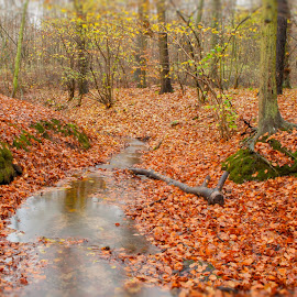 Autumn scene by Ruth Holt - Novices Only Landscapes ( broughton, stream, autumn, brook, leaves, woods )