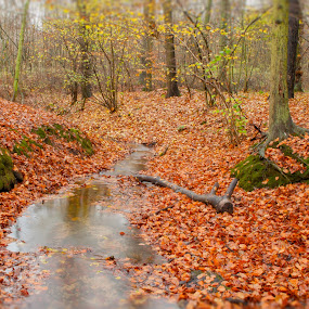 Autumn scene by Ruth Holt - Novices Only Landscapes ( broughton, stream, autumn, brook, leaves, woods,  )