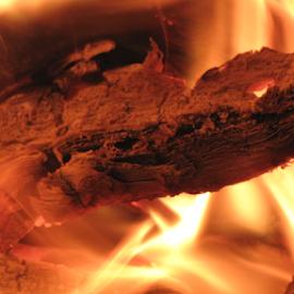 lizard by Darius Morgendorfer - Abstract Fire & Fireworks ( salamander, lizard, warm, wood, twilight, blaze, fire, flame, bonfire, midnight, autumn, coal, company, fuel, night, fireplace, firewood, burn, evening, light, salamandra )