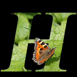 Letter H by Shona McQuilken - Typography Single Letters ( butterfly, letter, green, alphabet, leaf, leaves, h )
