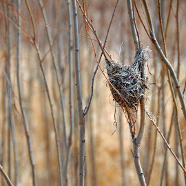 Tiny Nest by Taylor Gillen - Nature Up Close Hives & Nests ( up close, bird nest, mother nature, small, branches )