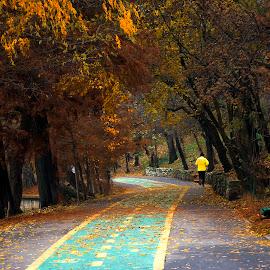 Autumn run by Iuliana Olteanu - City,  Street & Park  City Parks ( park, autumn, falling leaf, yellow, running )