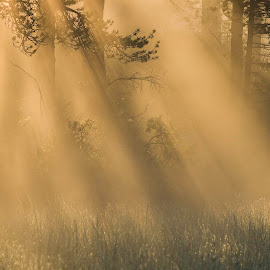 The light is life by Rita Barbro Skogset - Nature Up Close Other Natural Objects ( lights, fog, trees, morning, sun )
