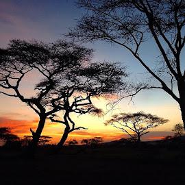 Senonera, Serengeti by Tyrell Heaton - Nature Up Close Trees & Bushes