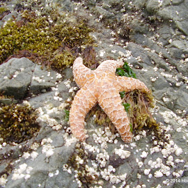 Wishing on a star by Howard Skaggs - Animals Fish