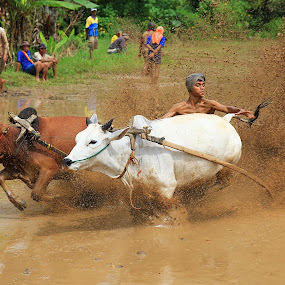 Pacu Jawi by Nasaruddin Naseh - Sports & Fitness Rodeo/Bull Riding