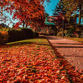 Red Carpet by Stuart Lilley - City,  Street & Park  City Parks ( bandstand, red, park, leaves, derbyshire, , fall, color, colorful, nature )