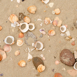 Sand and shells by Catalin Necula - Nature Up Close Sand ( sand, shells, beach )