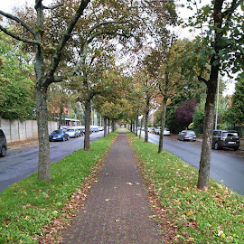 The road to my classes. by Gaurav Shroff - Instagram & Mobile Other ( fall, europediary, beautifuldestinations, gent, color, colorful, nature )