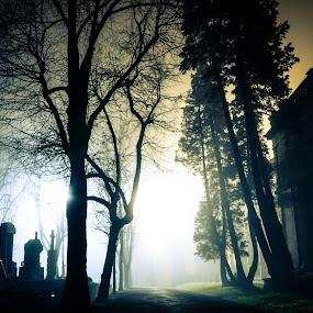 Dead Man Tell No Tales by Gospon Fulir - City,  Street & Park  Night