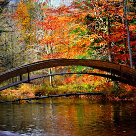 Bridge by Petar Gogov - Landscapes Forests ( water, leafs, fall, forest, bridge )