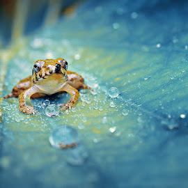 Crystal Guard by Robby Fakhriannur - Animals Amphibians