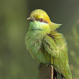 by Prasanna Bhat - Animals Other