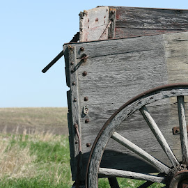 Antique Wooden Wagon in a Field by Robert Hamm - Transportation Other ( old, canada, vintage, pioneer, wagon, wooden wagon, morden, rural, manitoba, field, pasture, nature, homesteader, grain wagon, outdoor, meadow, buck board, antique )