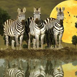 zebra by Nuki Irawan Adi Saputro - Digital Art Animals
