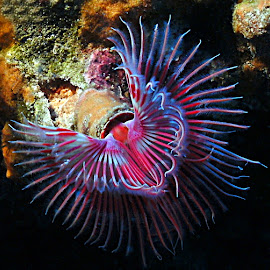 tube worm by Adi Drnda - Animals Sea Creatures