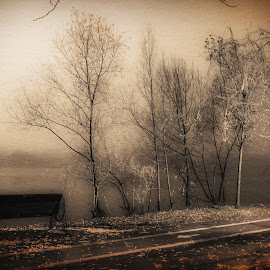Misty Morning 03 by Constantinescu Adrian Radu - Digital Art Places ( foggy, park, morning,  )