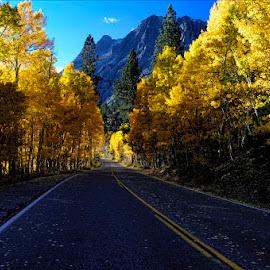 Aspen Road by Dub Scroggin - Landscapes Forests ( autumn, fall, califorrnia, sierra madre, aspen )