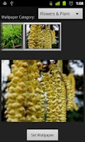Screenshot of Original HD Wallpapers