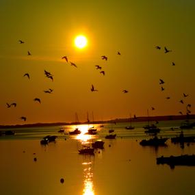 by Rob Kovacs - Novices Only Landscapes ( bird, fly, flight,  )