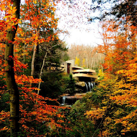 Fallingwater by Denise Guthery - Buildings & Architecture Homes