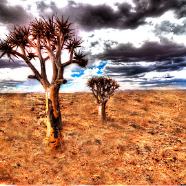 Tree by Andre Bez - Landscapes Cloud Formations ( clouds, desert, quiver tree, trees, vibrant, colorful, mood factory, happiness, January, moods, emotions, inspiration )