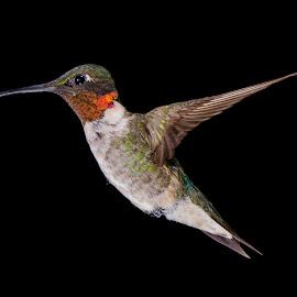 by Lyle Gallup - Animals Birds
