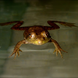 by E D - Animals Amphibians