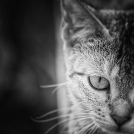 CAT's EYE by Ahamadul Karim - Animals - Cats Portraits ( eye bangladesh black&white pentax pentaxk20d light cat animal b&w )