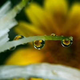 Tiny magical drops of water by Saurabh Gaikwad - Nature Up Close Water ( water drops, macro, nature, dew drops )