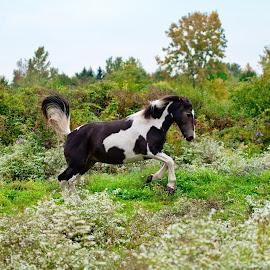 by Brett Giddings - Animals Horses