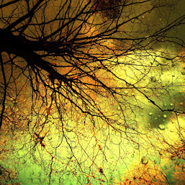 woodlands by Kathleen Devai - Landscapes Forests ( trees branches sky water colour )